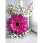 꽃 981