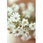 꽃 1076
