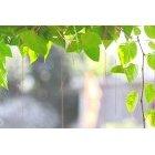 나뭇잎 402