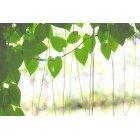 나뭇잎 396