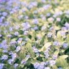 꽃 1088