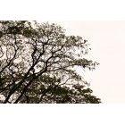 나무 671