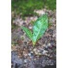 나뭇잎 412