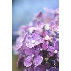 꽃 1191