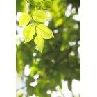 나뭇잎 478