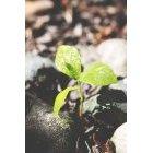나뭇잎 473