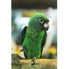 앵무새 49