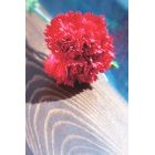 꽃 1240