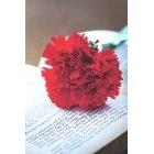 꽃 1286