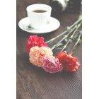 꽃 1421