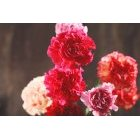 꽃 1420
