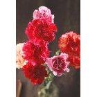 꽃 1419