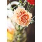 꽃 1412