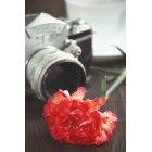 꽃 1400