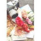 꽃 1393