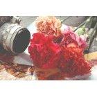 꽃 1390