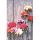 꽃 1371