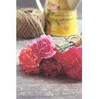 꽃 1368