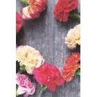 꽃 1364