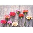 꽃 1363