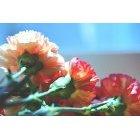 꽃 1498