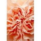 꽃 1521