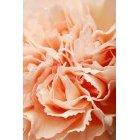 꽃 1504