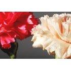 꽃 1608