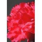 꽃 1599