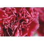 꽃 1641