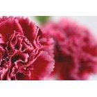 꽃 1639