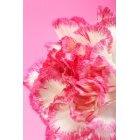 꽃 1679