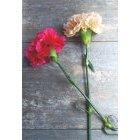 꽃 1665