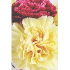 꽃 1655