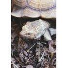 거북이 26