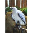 독수리 25