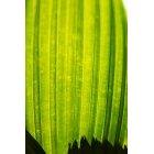 나뭇잎 490