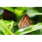 나비 78