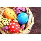계란 205