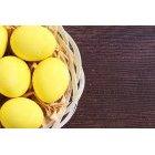 계란 181