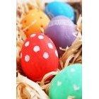 계란 266