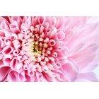 꽃 2708
