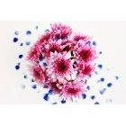 꽃 2604