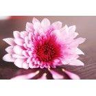 꽃 2574