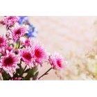 꽃 2557