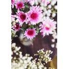 꽃 2553