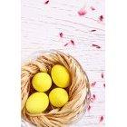 계란 251