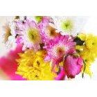 꽃 2472