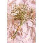 꽃 2467