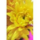 꽃 2463